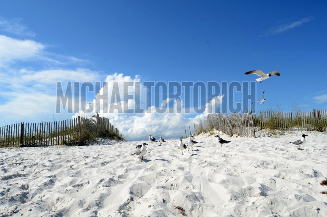 Navarre Florida beach photo